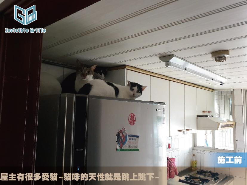 貓咪防墜樓