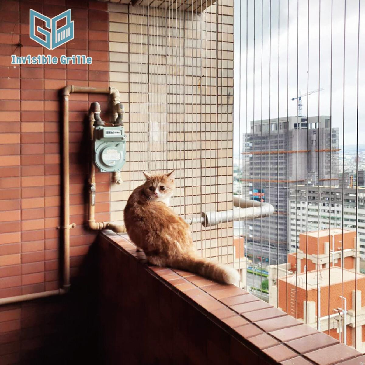 高雄隱形鐵窗 , 貓跳樓