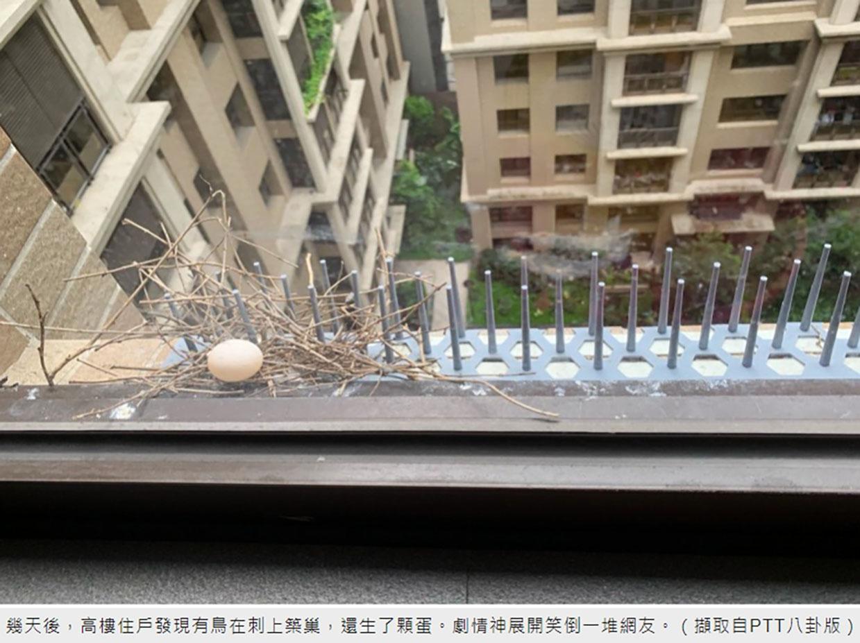 防鴿 防鳥刺 隱形鐵窗 防鳥網